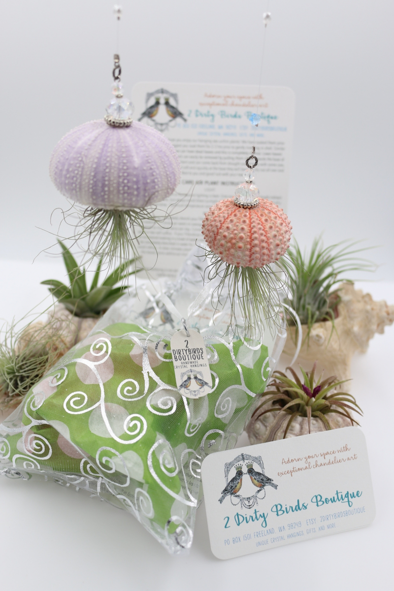 "Hanging Air Plant, ""Jellyfish Airplant"""