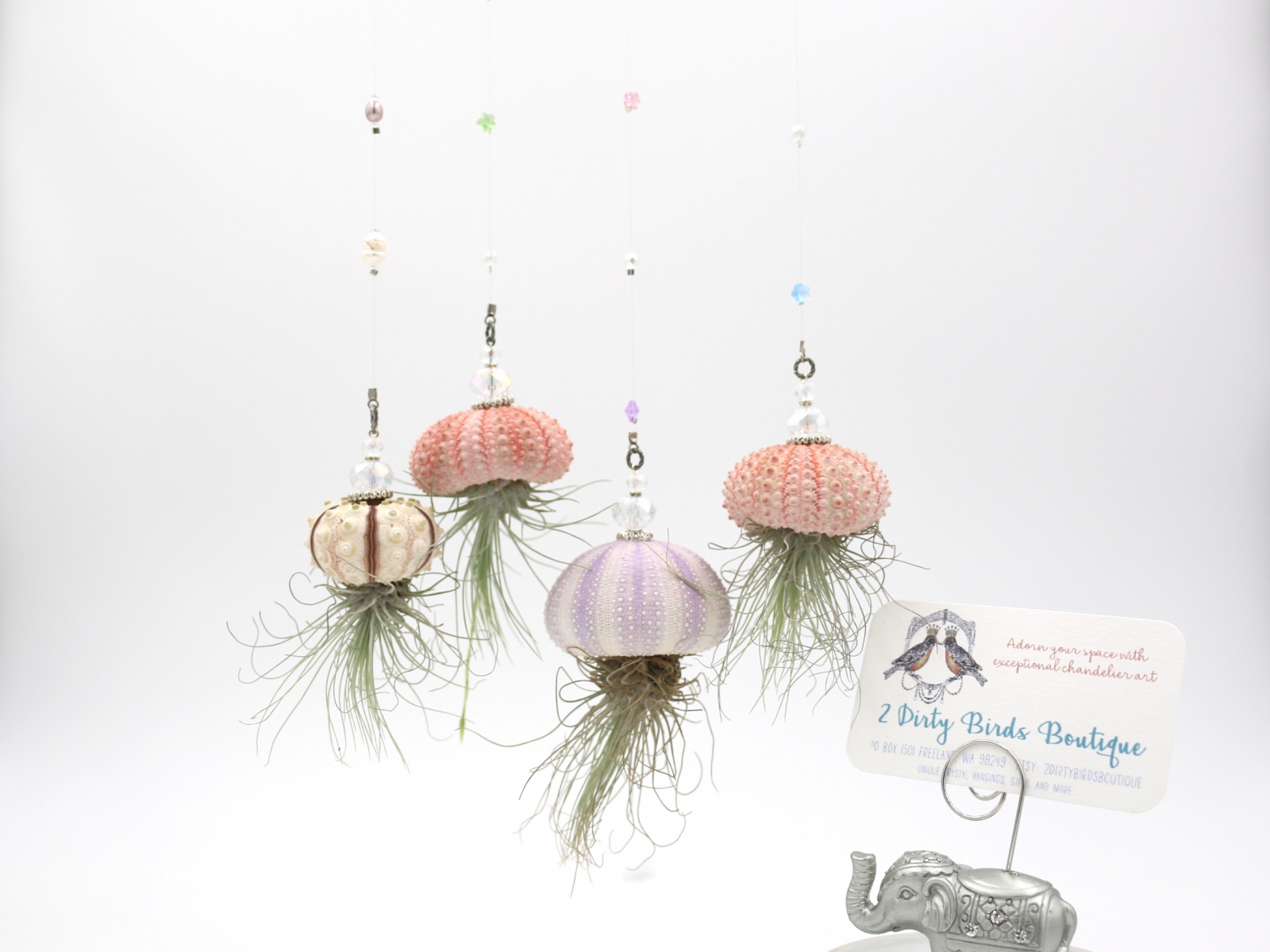 "Hanging AirPlants, ""Jelly Fish AirPlant"""
